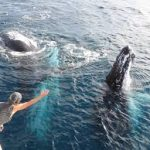 East Coast Fraser Island and Whale Watching Packages Hervey Bay
